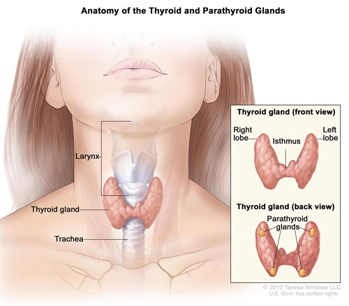 General Surgery Hyperthyroidism