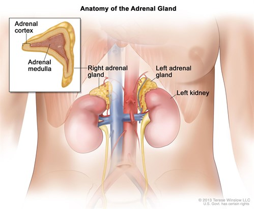 Image result for adrenalectomy