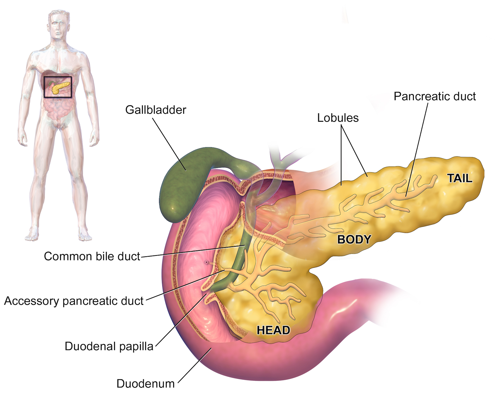 General Surgery Whipple Procedure Pancreaticoduodenectomy