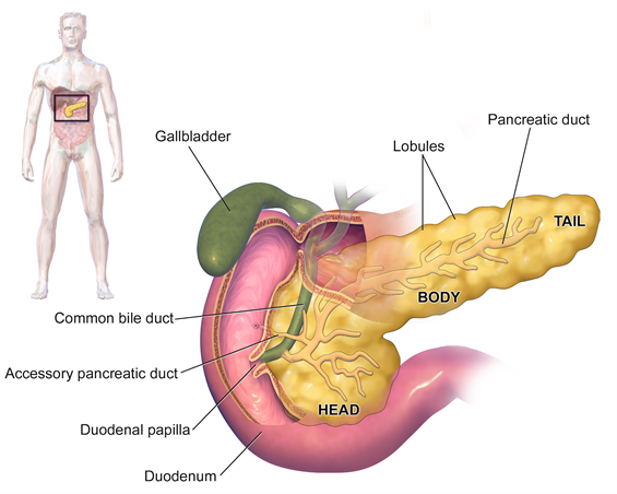General Surgery Cholecystectomy Gallbladder Removal